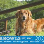 THE 2020 GRROWLS CALENDAR IS HERE!
