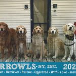 GRROWLS 2022 Golden Retriever Calendar